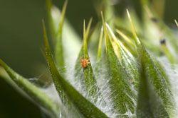 Spinnmilben an Zimmerpflanzen bekämpfen – 5 effektive Tipps