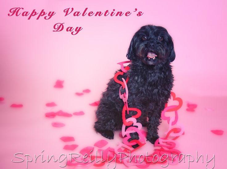 Valentine's Day Pet Portraits by Uxbridge, Durham Region, Ontario, photographer Spring Reilly of Life's Elements Photography. www.springreilly.com