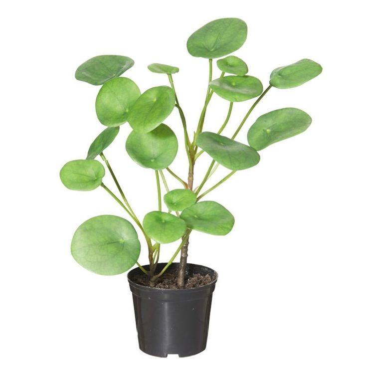 Chinese Money Plant In Garden Pot Artificial Plant – artificial plants