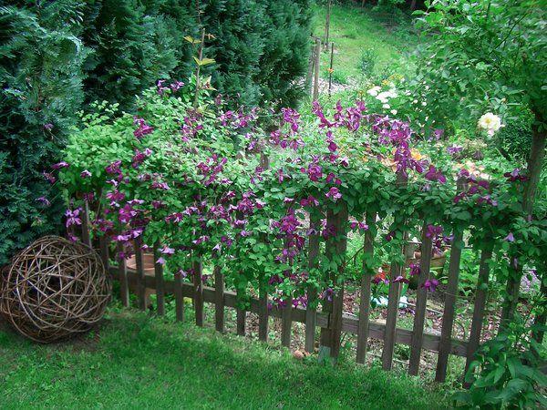 Kletterpflanzen für Zaun und Rankgitter - Seite 2 - Gartengestaltung - Mein schöner Garten online
