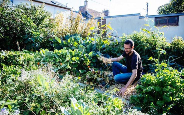 Grâce à la permaculture, il récolte 300 kg de légumes dans son jardin