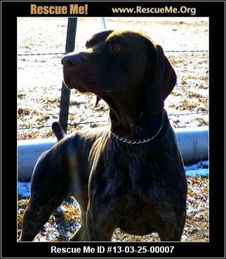 Buck— Colorado German Shorthaired Pointer Rescue — ADOPTIONS —RescueMe.Org