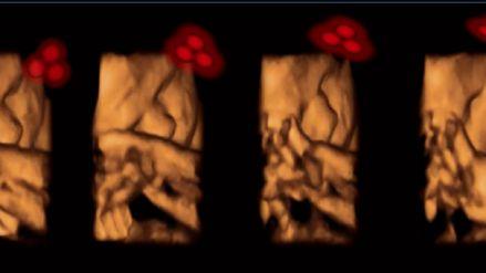 #Los bebés reconocen rostros desde el vientre materno - RPP Noticias: RPP Noticias Los bebés reconocen rostros desde el vientre materno RPP…