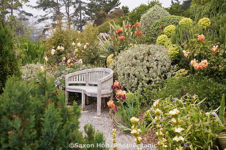 Bench in cottage garden with  Hebe 'Andersonii Variegata' on right. Rose 'Lady Hillingdon' on left , rust colored Rose 'The Edwardian Lady' behind bench, Rose 'Pat Austin' on right. Sally Robertson Garden.