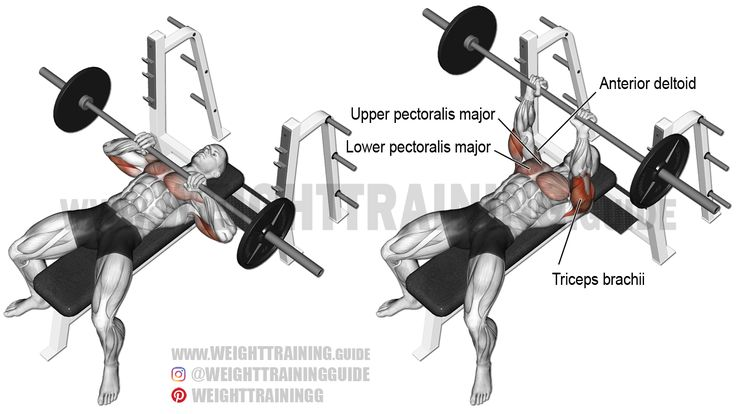 Activate and build your triceps brachii, pectoralis major, and anterior deltoid using the close-grip barbell bench press, a compound push exercise.