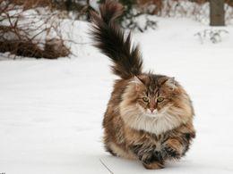 Les chats en hiver