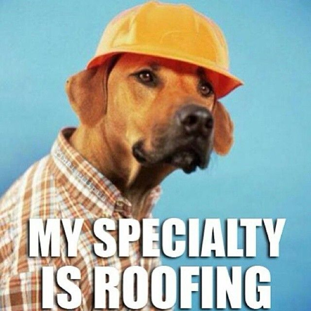 :: my specialty is roofing | horseheadinfidel ::