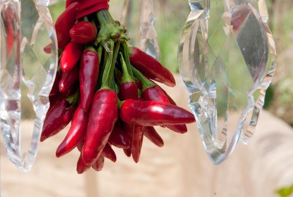 #Tailsman #Art #Peppers #love #cornicello