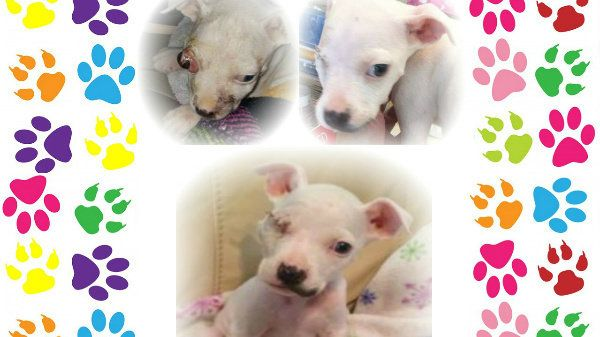 Florence Alabama Police Department:  Prosecute the abuse of an innocent puppy and ensure JUSTICE for Milagro. https://www.change.org/p/florence-alabama-police-department-prosecute-the-abuse-of-an-innocent-puppy-and-ensure-justice-for-milagro?utm_campaign=crowdfire&utm_content=crowdfire&utm_medium=social&utm_source=pinterest
