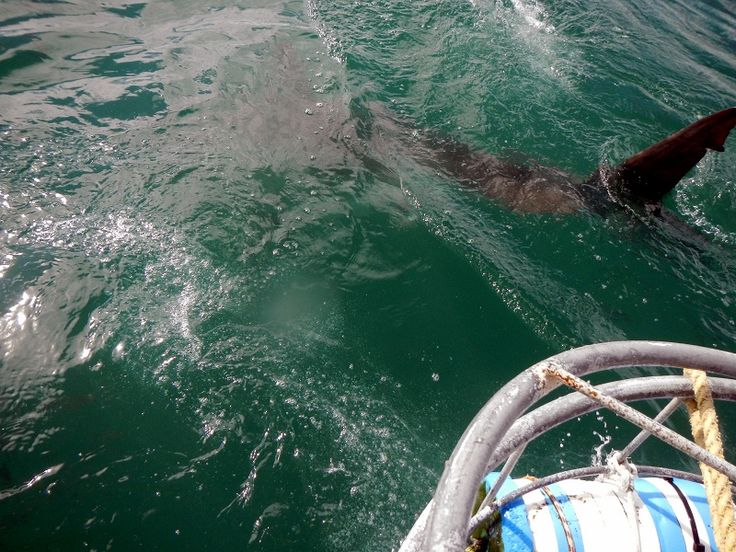 #shark cage diving. #SouthAfrica