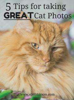 17 Best Ideas About Cat Photography On Pinterest Cat