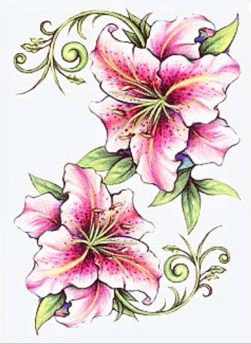 Stargazer Lily Flower Tattoo Designs: Pin By A.D.D Photography On Tattoo Ideas