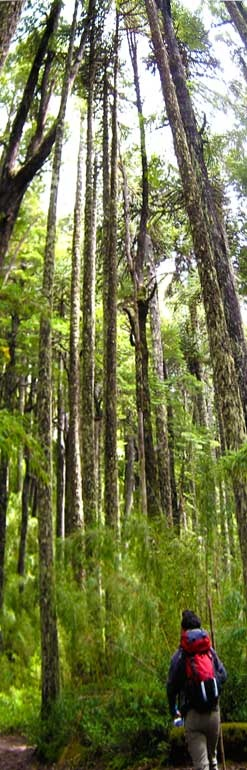 Villarrica National Park, Chile, part of our Chile Tours. Visit us at www.cascada.travel