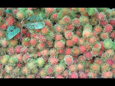 Khmer Street Fruits at Fork Road to Sre Ambil and Sihanoukville