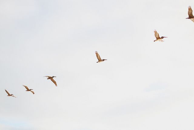 arcipelago:    (via Untitled | Flickr - Photo Sharing!)