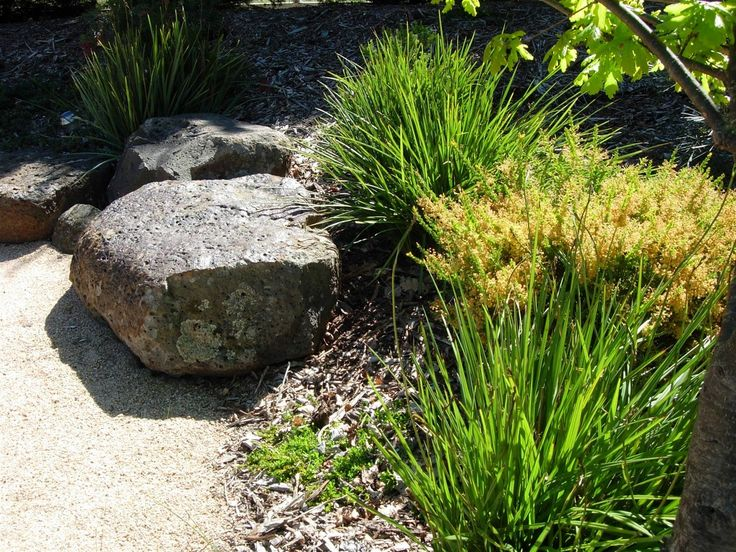 Australian native drought tolerant garden.