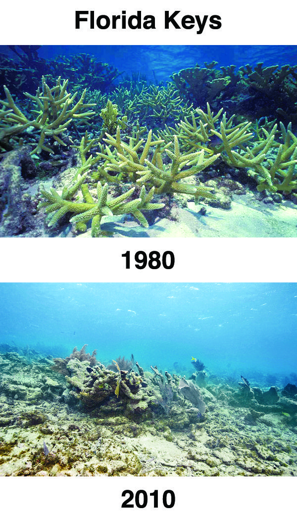An analysis of the coral reefs in the oceans