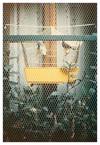 Luigi Ghirri, Modena, 1972, C-print, 6 3/4 x 4 3/4 inches; 17 x 12 cm