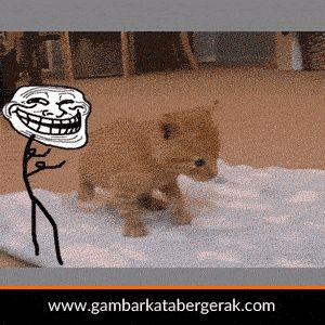 Gambar animasi bergerak lucu, kucing didorong sampai jatuh sama meme trol :D