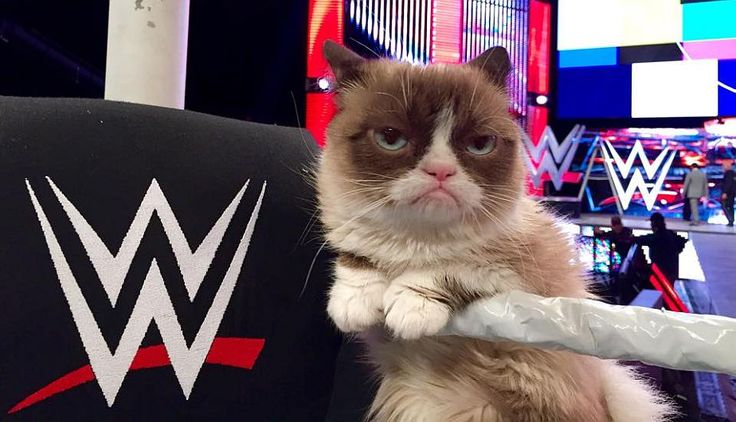 'Grumpy Cat' y su gran noche en la WWE [Fotos y video] #Peru21
