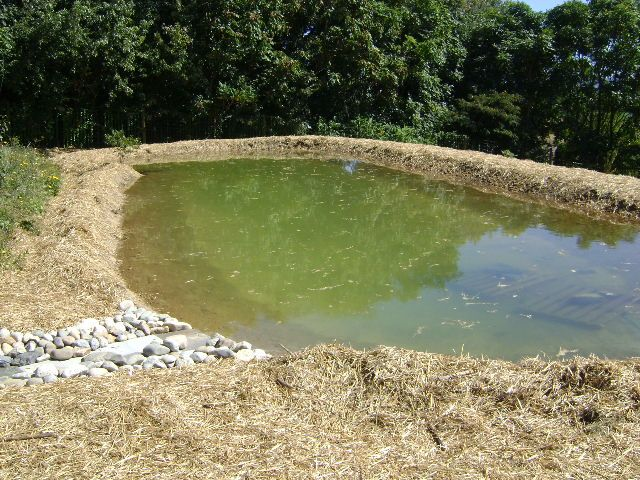 How To Build An Earthen Pond And Dam Wall Pond Construction