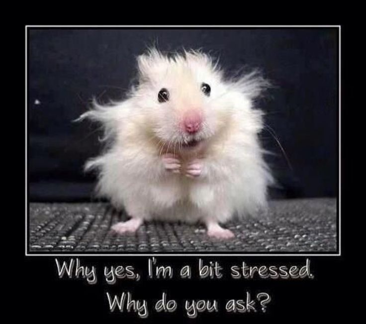 Want to live longer? I can show you how. It may seem unbelievable but stress can take off 4-8 years of your life. Let me show you how to stress less https://highmountainproducts.lpages.co/free-guide/