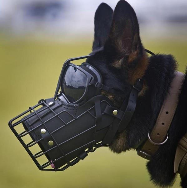 Mask For A Parachute Jump Dog Military Dogs Service Dogs War Dogs