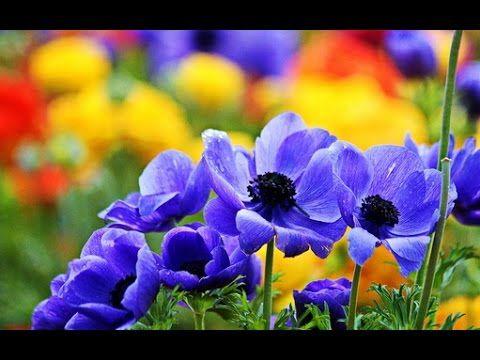 Удивительные цветы лета