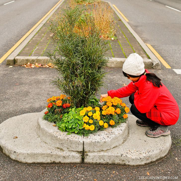 Smallest Park in the World - Mill Ends Park (+ 25 Free Things to Do in Portland Oregon) // localadventurer.com