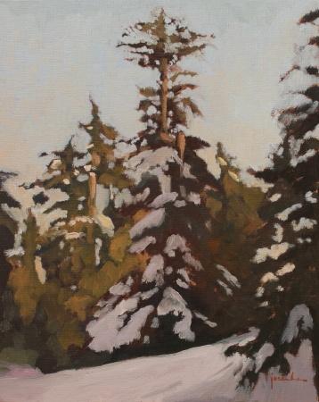 Cypress Late Winter