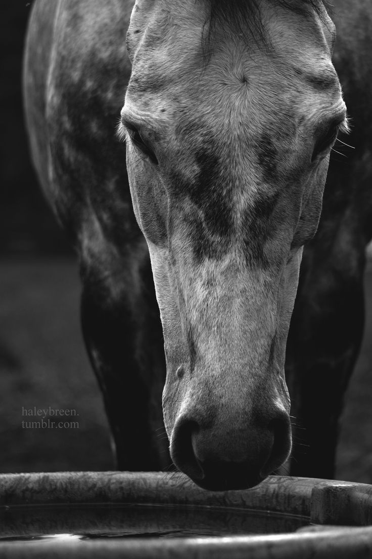 best horse images on pinterest equine photography horse