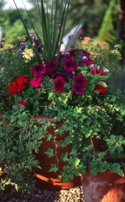 container gardening ideas pictures | Garden Planting Ideas on Container Gardening Ideas, 400x647 in 95KB