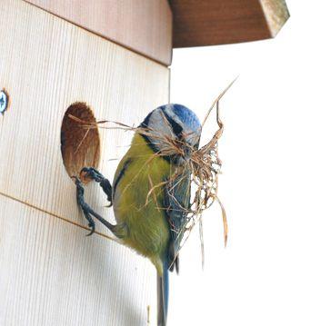 Bird Box Cameras, Wildlife Cameras, Nest Box Cameras   Gardenature