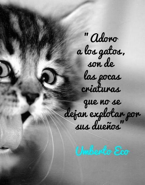 Adoro a los gatos, son de las pocas criaturas que no se dejan explotar por sus dueños. Umberto Eco.