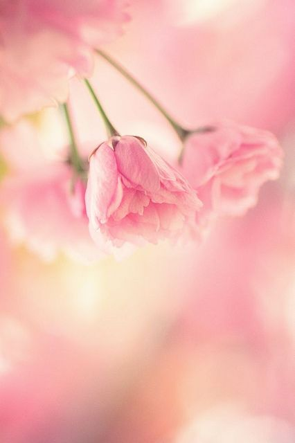 a sigh in pink