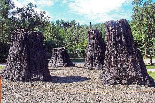 Ismerd meg te is a mesebeli bükkábrányi ősfákat!