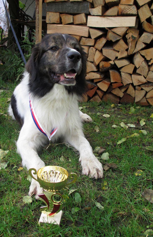 Dorian Grey Jakubská húrka - V2, Res.CAC (dog show in RUSAVA, Czech republic)