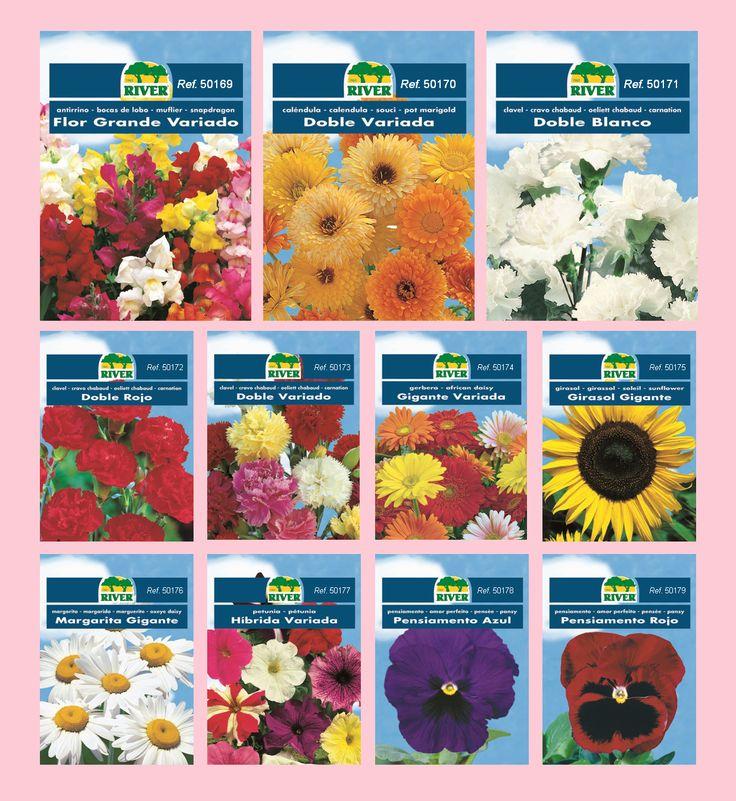 Descubre nuestra colección de Semillas Florales y nuestros consejos de cultivos en www.river-canarias.com