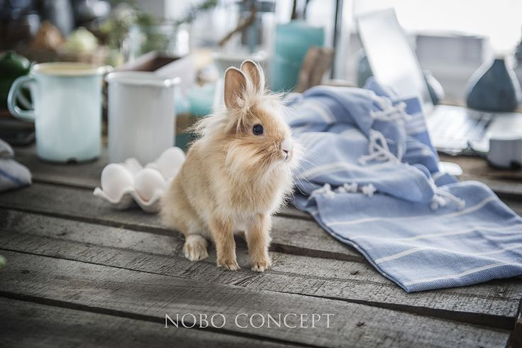 www.noboconcept.com Awaiting Easter...two days to go!