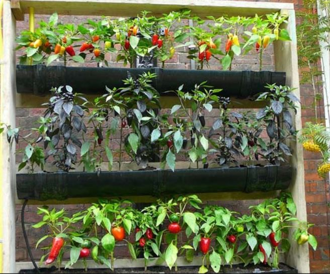 17 Best Images About Gardening With Gutters On Pinterest