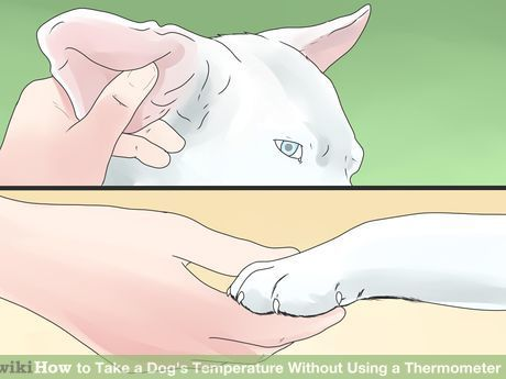 How to Take a Dog's Temperature Without Using a Thermometer