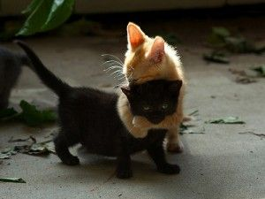 Happy Hug Your Cat Day!