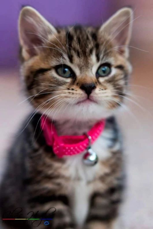 Kitty - What more to say other than we just LOVE cool stuff!