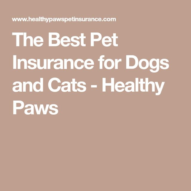 The Best Pet Insurance for Dogs and Cats - Healthy Paws