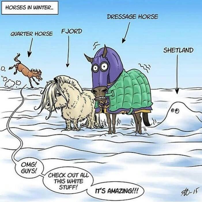 Horses in Winter #EquestrianComic