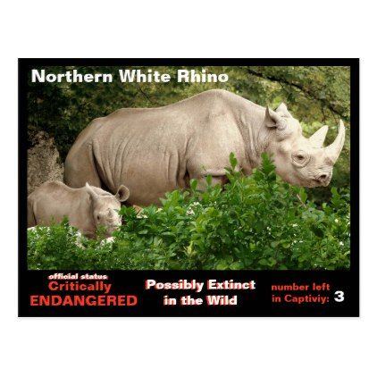 The Northern White Rhino is almost extinct - Postcard - original gifts diy cyo customize
