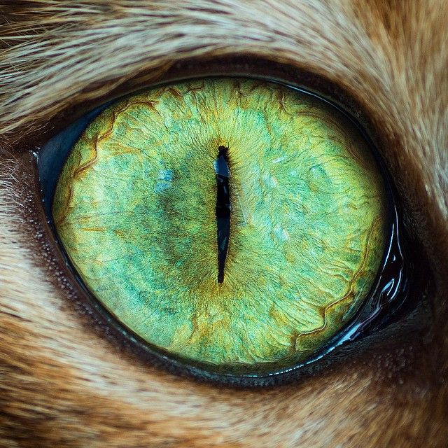 8 Amazing Photos: Photographer Highly Allergic to Cats Now Shoots ...