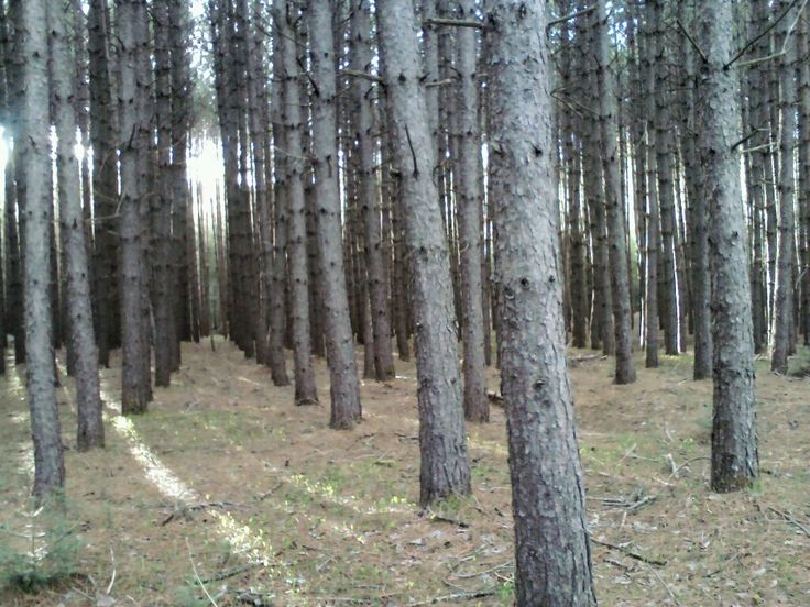 The Pines, Tobique First Nation Nb Canada