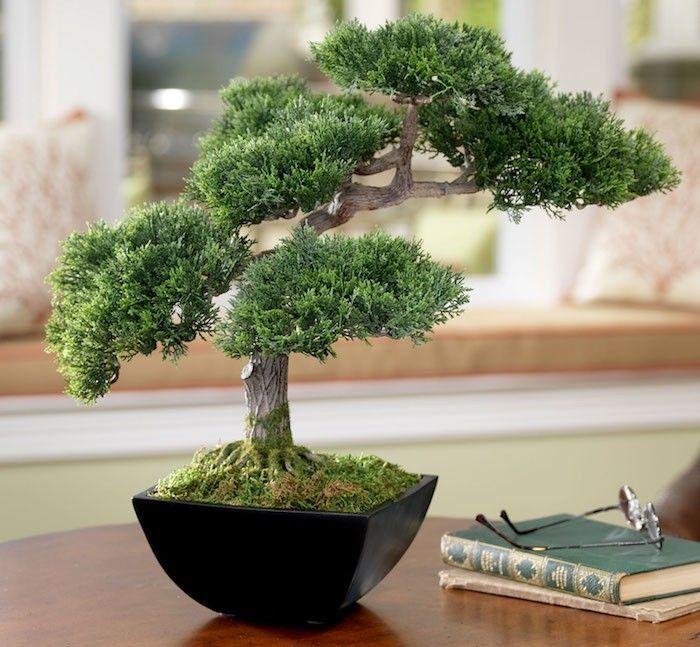 fausse plante style bonsai artificiel comme deco intérieur