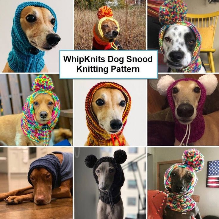 Dog Snood Knitting Pattern, PDF Instant Download, Knitted ...